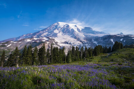 Beautiful wildflowers and Mount Rainier, Washington state photo