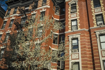 multifamily: Classic old apartment building and blooming cherry tree, New York City