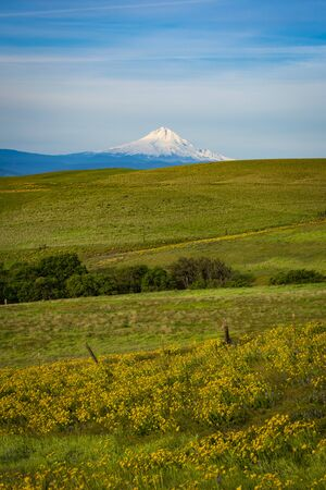 mount hood: Mount Hood and spring flowers near the Columbia River Gorge