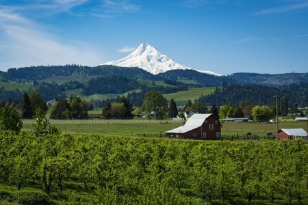 oregon  snow: Snowy Mount Hood among apple orchards in the hood River Valley, Oregon