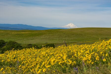 cascade range: Mount Hood and spring flowers near the Columbia River Gorge