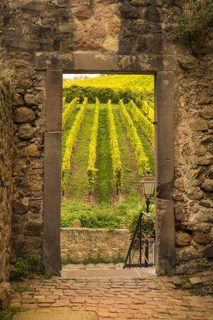 french doors: Vineyard in France seen through open door in old stone wall