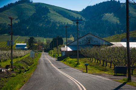 Paved road among blooming apple orchards in Hood River Valley, Oregon Stock Photo