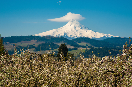 Blooming apple orchards and Mount Hood, Hood River Valley, Oregon Imagens