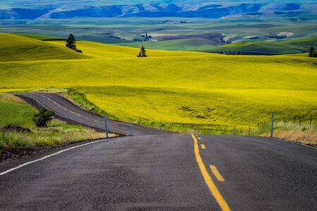 Paved highway passing through canola fields and hills in Palouse region of Washington state