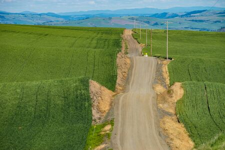 Gravel road passing through wheat fields in Palouse region of eastern Washington state