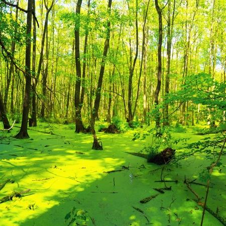 Swamp - Briesetal at Birkenwerder - Brandenburg - Germany