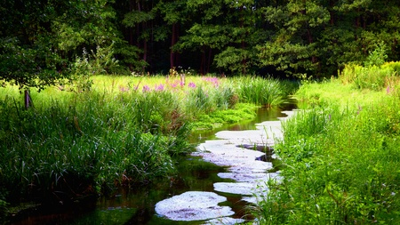landscape - river at Briesetal swamp, Germany