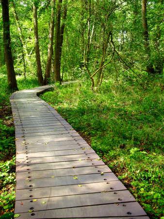 swamp at Birkenwerder-Brandenburg, Germany