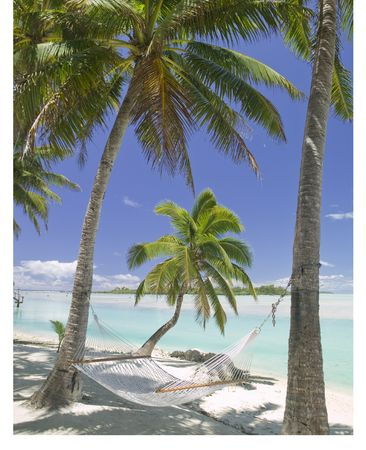 Tropical Dream Beach Paradise of the South Pacific Hammock under Palm Trees