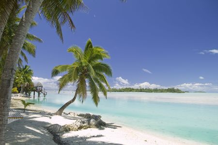 Tropical Dream Beach Paradise of the South Pacific Stok Fotoğraf