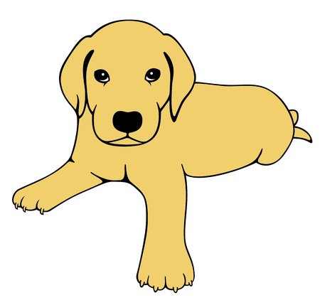 Labrador Puppy Vector
