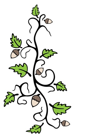 Oak and acorns Illustration
