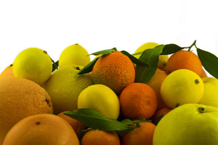 Stock of citrus fruits Stock Photo