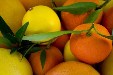Citric close up