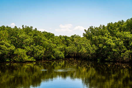 A look at some of the magnificant sights to see in Weeden Island Preserve.
