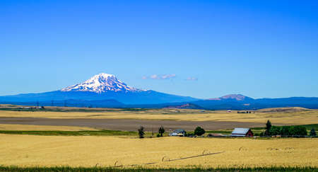 A beautiful farm with a great view of Mount Adams just outside of Yakima Washington.