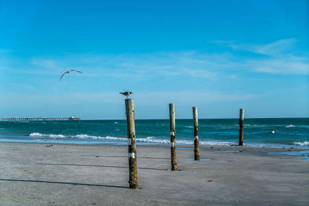 A day at St. Petersburg beach in St. Petersburg Florida.