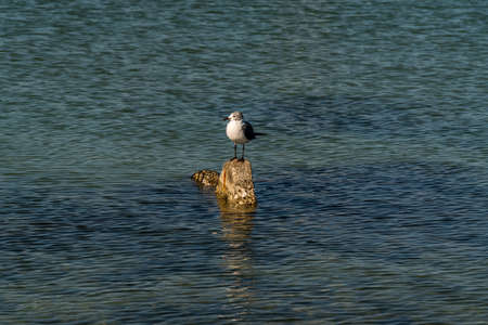 Birds perched on rocks and posts, relaxing in the late day sunshine.