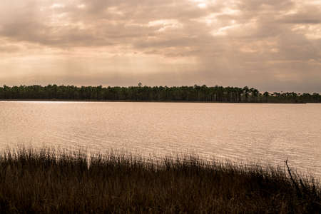 Tarkiln Bayou Preserve State Park near Pensacola Florida is a must see if your in the area.