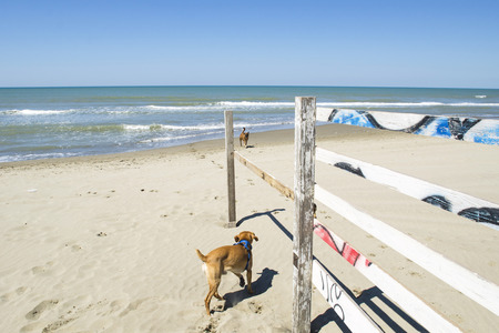 perros jugando: Perros que juegan en la playa, cielo azul