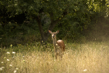 Deer live freedom in Abruzzo National Park Stock Photo