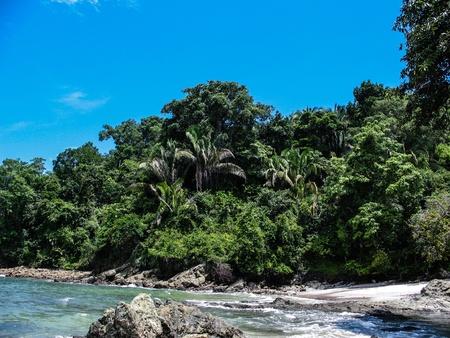 antonio: Coastal Rain Forest