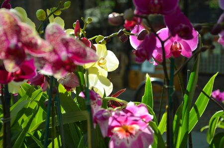 Orchids in the Sun Imagens