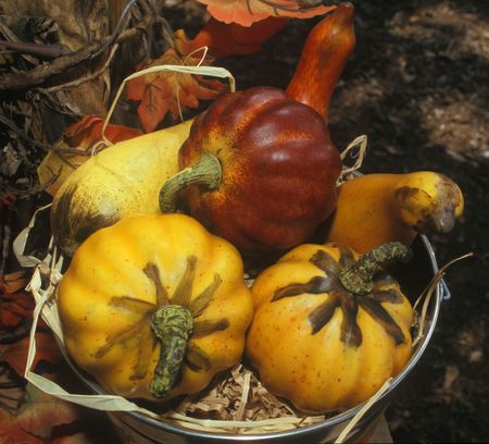 gourds: Gourds Stock Photo