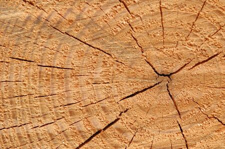 Tree rings in freshly cut lumber shows the passage of time Stock Photo