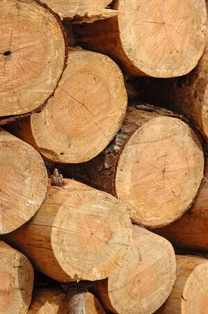 Portrait shot of freshly cut lumber stack Stock Photo
