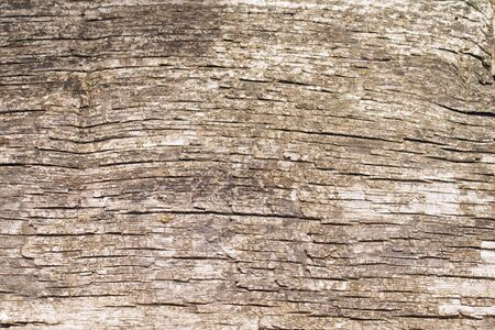 Cracked and peeling wooden surface of old timber.  Texture of old wooden board.