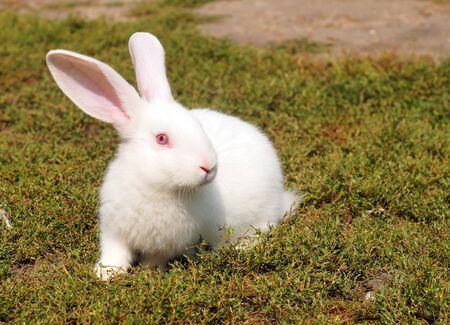 Small white rabbit on the green lawn. Cute baby rabbit. 免版税图像
