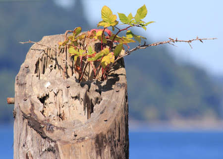 Wood piling with solitary tenacious green plant photo