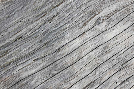 Grey old cracked and pittied weathered driftwood background