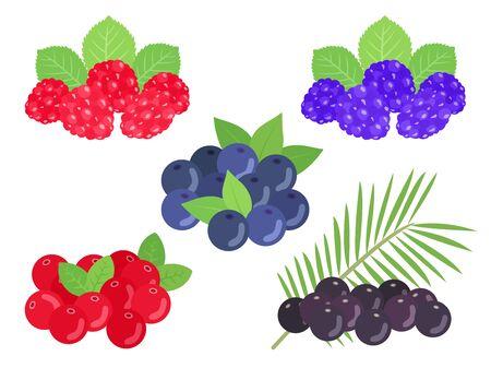 Berry Illustration