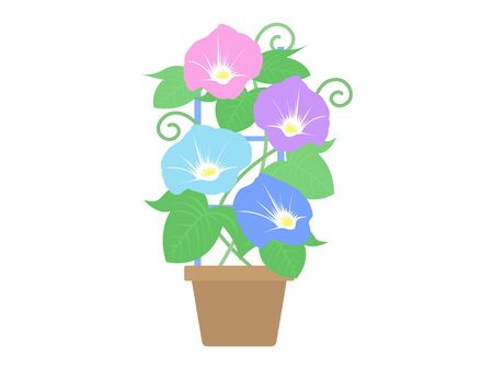 An illustration of a flower on the morning glory. 일러스트