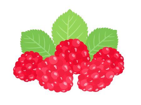 Raspberry illustrations.
