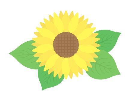 Illustration of sunflowers. Summer illustrations.