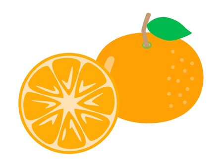 Illustration of mandarin oranges.
