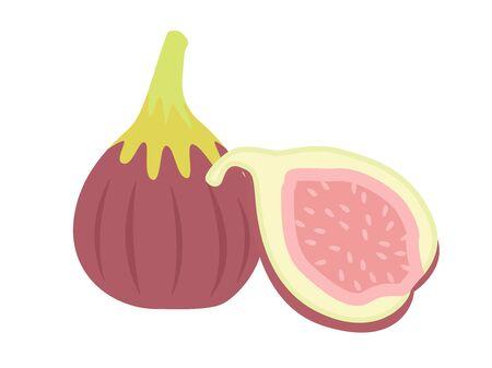 Fig illustration. Ilustrace
