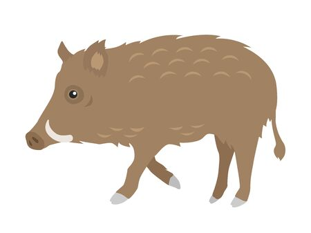 Illustration of a boar with fangs. Illustration