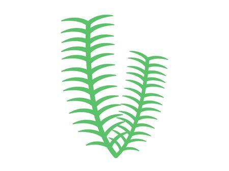 Aquatic plant  イラスト・ベクター素材