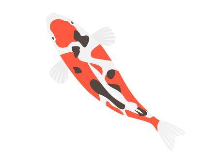 Illustration of a swimming carp