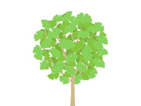 Ginkgo Tree Illustration Ilustrace