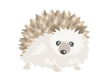 Hedgehog Illustration Ilustração
