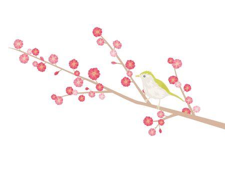 Illustration of plum tree Illusztráció