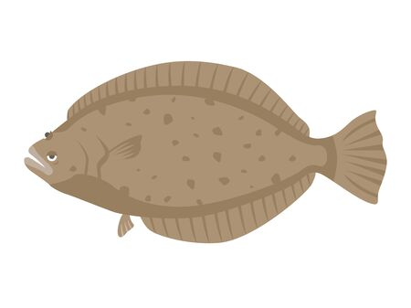 Illustration of flounder