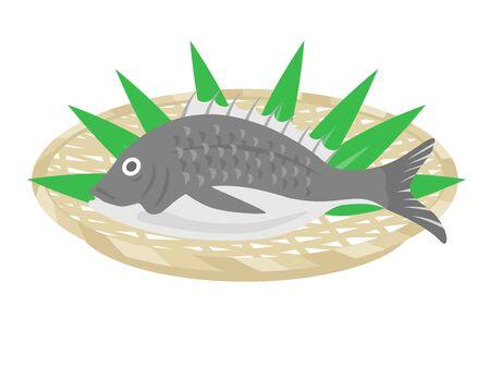 Blackfish Illustration