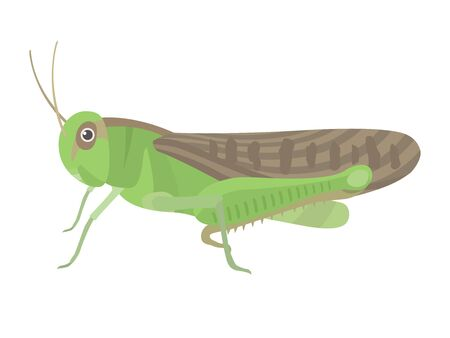Illustration of a green grasshopper